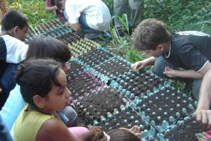 Children planting seeds in a tree nursery in an environmental volunteering project