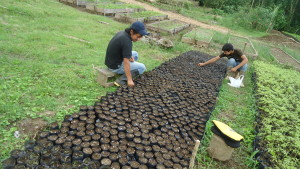 Volunteer in Ecuador works in the tree nursery together with a farmer