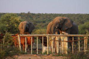 Wilflife-Projekt mit Elefanten