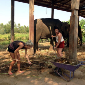 Voluntour Elephants Thailand