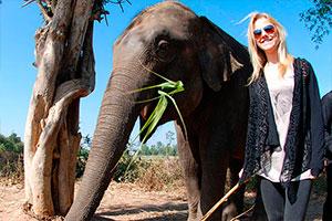 Volunteer in Thailand with Elephants