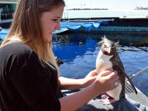 Freiwilligenarbeit in Südafrika - Meeresbiologie