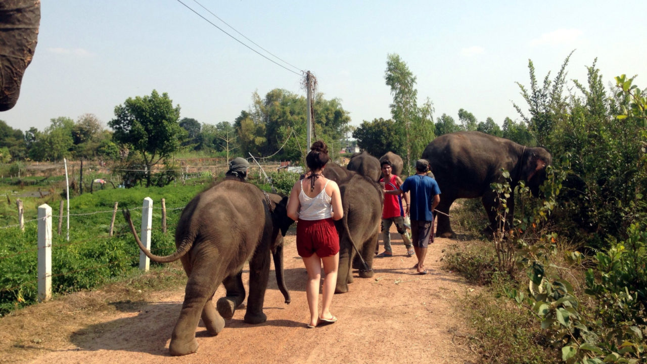Volunteer with Elephants in Thailand