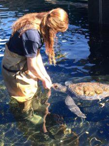 Voluntária com uma tartaruga marinha