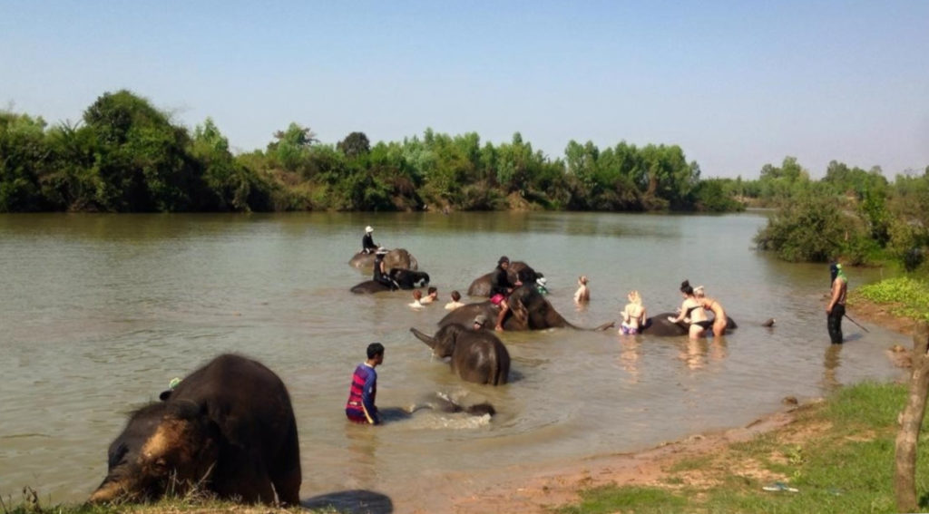 Surin: Bathing the elephants in the river