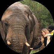 Big Five Elefantes
