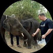 Elefantes Voluntour