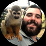 Macacos Vervet