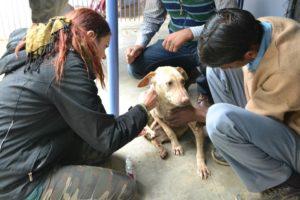 Conservação Animal na Índia