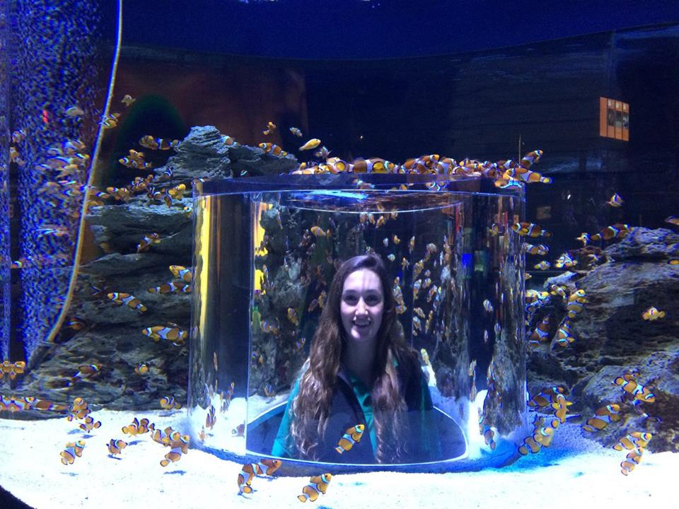 Volunteer Abroad Projects in Marine Conservation - Picture of a Volunteer inside an Aquarium in Cape Town.