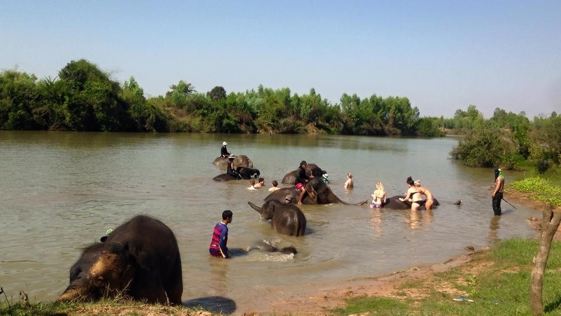Bathing Elephants in the River