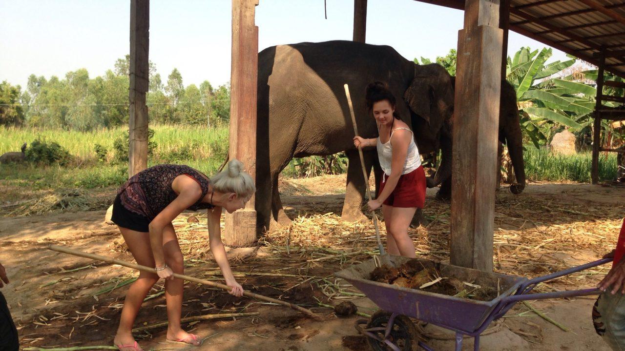 Voluntários cuidando de elefantes em Surin