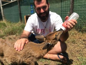 Ricardo Ramajo caring for orphaned animals