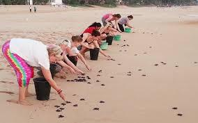 Save sea turtles on the Beach