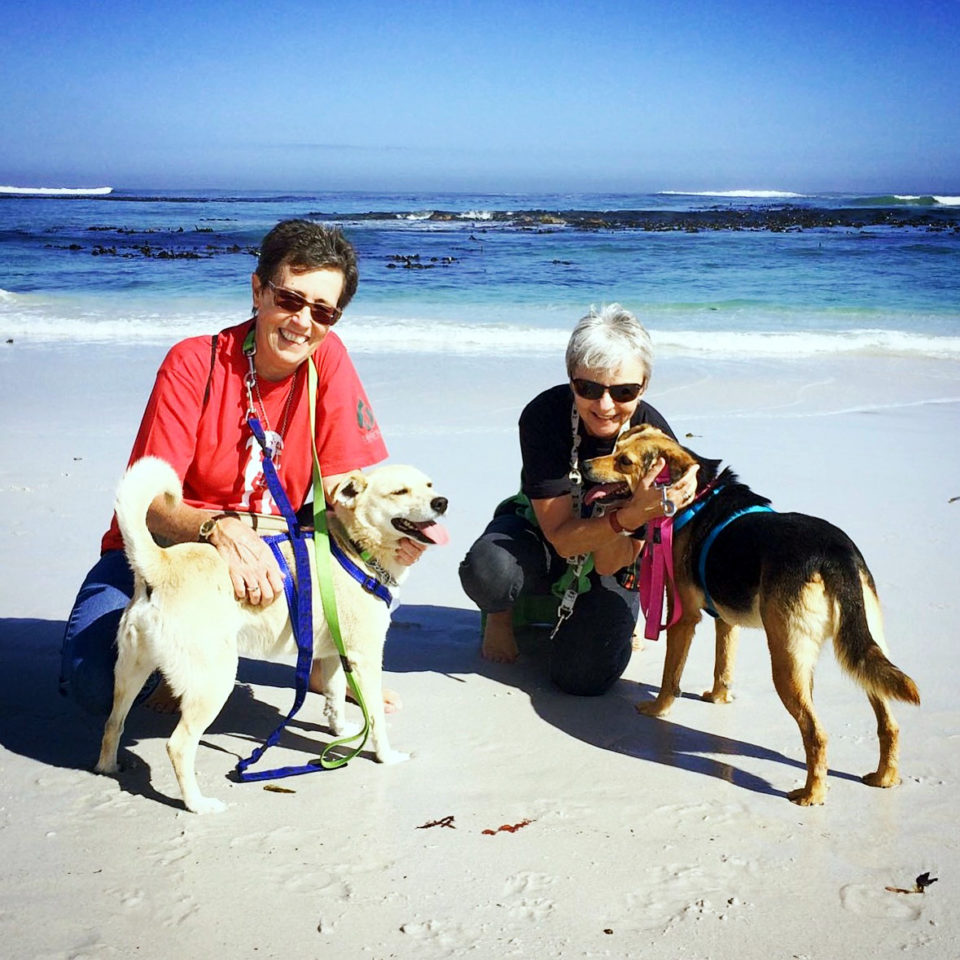 Two Ladies with the dogs at the beach