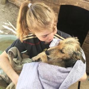 Freiwillige Tierschützerin mit einem Hund