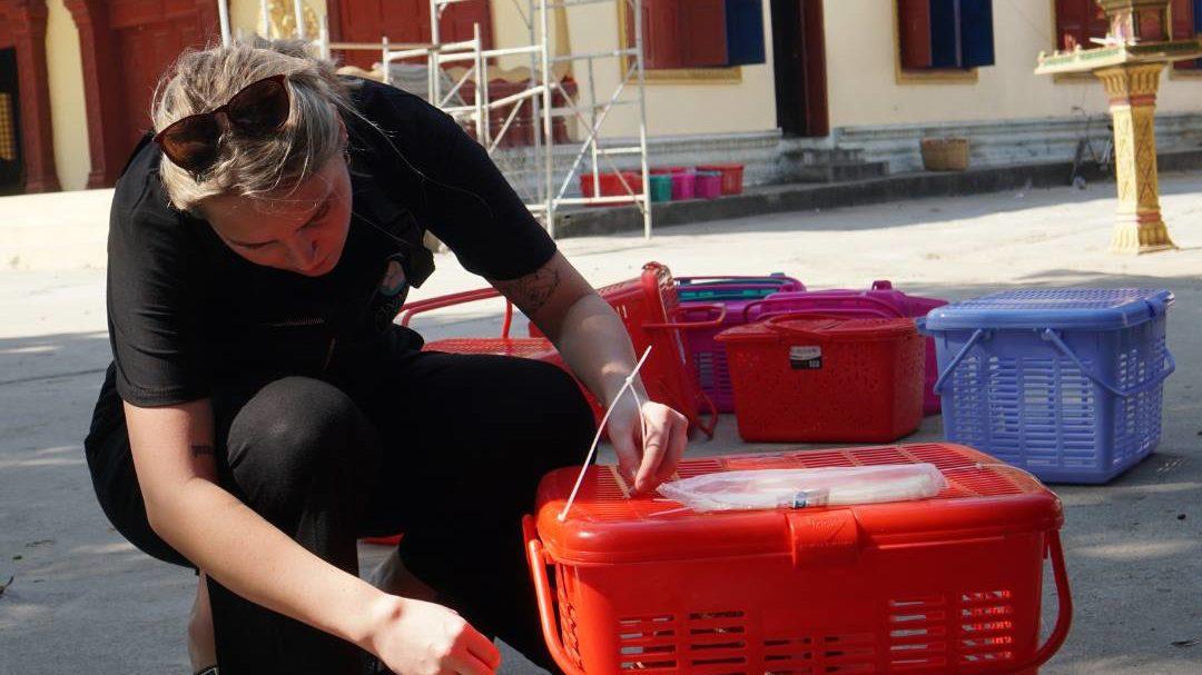 Animal Rescue in Cambodia • iko poran volunteer abroad