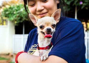 Resgate de animais de estimação no Camboja
