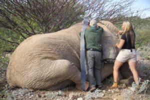 Wildlife Volunteers caring for elephants